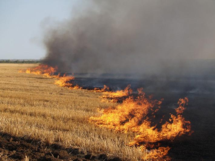 Суха трава спалювання статистика