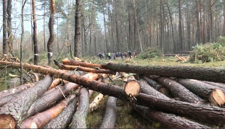 лісові протести під Любешовом