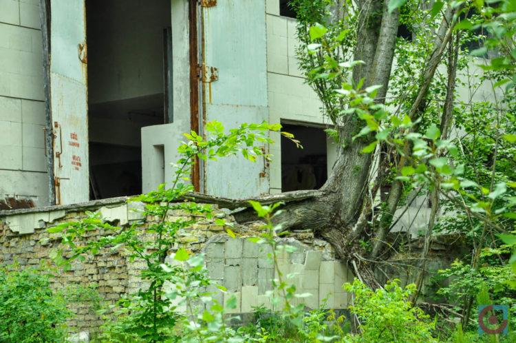 Дерева проростають з фундаментів закинутих будинків, Прип'ять