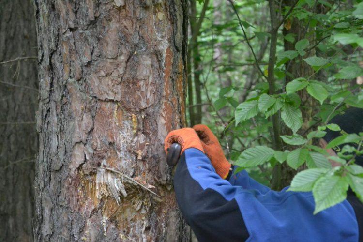 позначки на дереві мітки в лісі