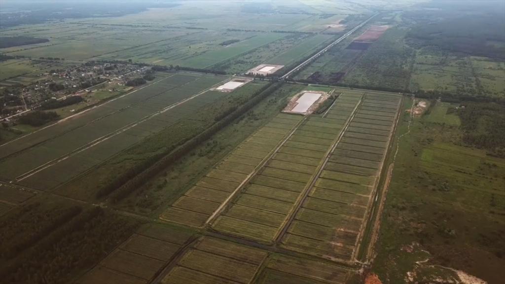 плантації лохини у селі Положево